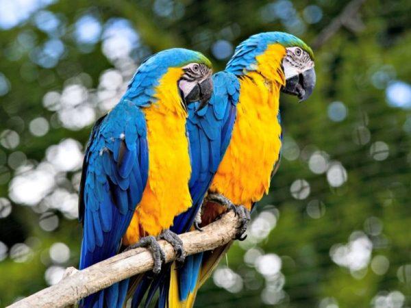 escaped-pet-birds-are-teaching-wild-birds-how-to-speak-English-2-889x592