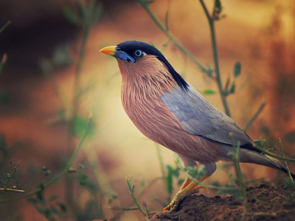 wild-bird-photography-tips