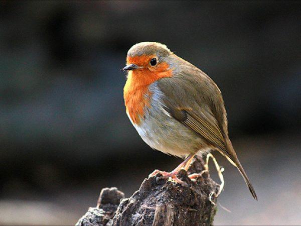 wild-bird-photos